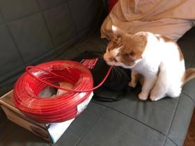 我已经买了网线接上了猫,怎么我还是连不上网啊?