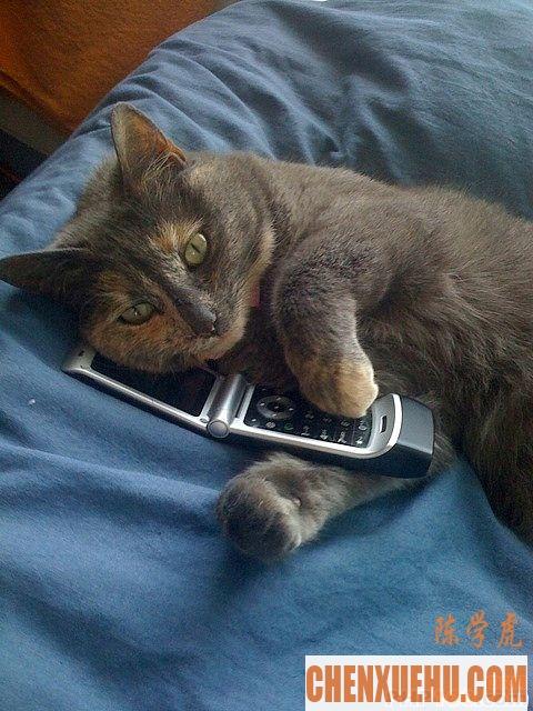 如果程序员是猫,你是哪只猫?